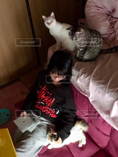女性,猫,部屋,室内,女の子,人,ソファ,のんびり,DVD,ベッド,ステューシー