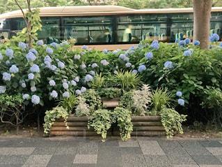 花,雨,京都,青,紫,紫陽花,バス,梅雨