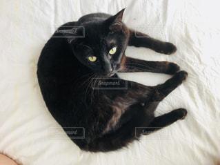 黒猫の写真・画像素材[1221312]