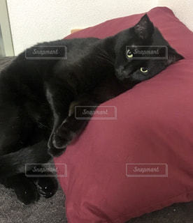 猫,部屋,室内,ペット,寝る,枕,黒猫,ベッド