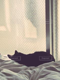 猫,部屋,室内,窓,布団,黒猫,のんびり,ベッド