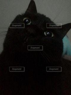 暗闇の中の黒猫の写真・画像素材[1258390]