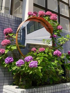花,ピンク,紫,鏡,紫陽花,梅雨,草木,カーブミラー