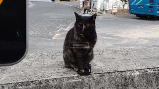 猫,動物,ペット,人物,野良猫,瀬戸内,サビ猫,豊島,ネコ