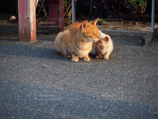 家族,猫,動物,屋外,白,親子,オレンジ,ペット,人物,座る,絆,コンクリート,野良猫,茶トラ,ネコ,寄り添う