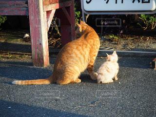 家族,猫,動物,屋外,親子,オレンジ,ペット,子猫,人物,座る,野良猫,地面,そっくり,瀬戸内,豊島,ネコ