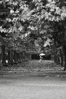 雨の中の写真・画像素材[849340]