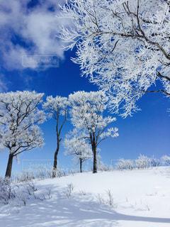 雪に覆われた木の写真・画像素材[1732070]