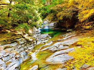 秋,紅葉,川,紅葉狩り,面河渓