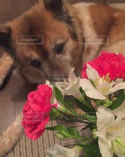 犬の写真・画像素材[494104]