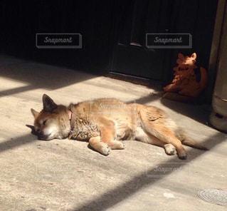 犬,昼寝,ペット,寝顔