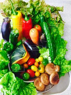 野菜の写真・画像素材[522519]