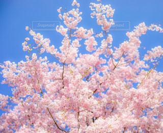 青い空の下のサンゴの写真・画像素材[1134889]