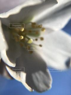 近くの花のアップ - No.910296