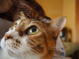 猫,ペット,目,キャット,雑種,猫目