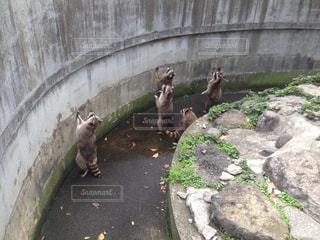動物園 - No.672732
