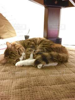 ベッドの上で横になっている猫 - No.742774