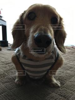敷物の上に座っている犬 - No.742776