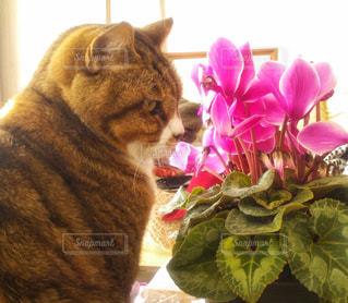 花の前に座っている猫 - No.851685