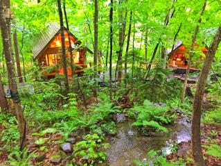 森の中の木 - No.882872