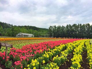 フィールド内の黄色の花 - No.882906