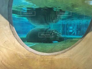 水のプールで泳ぐクマ - No.882955