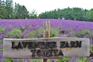 木製ベンチの紫の花 - No.882970