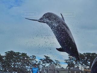 空を飛んでいる鳥 - No.943887