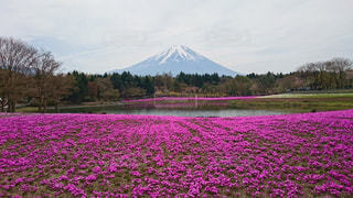 背景に富士山と木々 に囲まれた水の体の写真・画像素材[1122294]