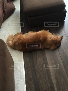 床の上に横たわる大きな茶色の犬の写真・画像素材[1358903]