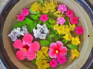 近くの花のアップの写真・画像素材[1375547]