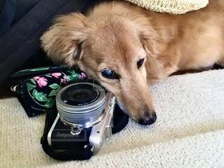 カメラと犬の写真・画像素材[3387419]