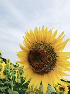 花の写真・画像素材[616418]