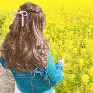 花の写真・画像素材[597262]