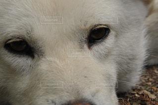 犬の写真・画像素材[498718]