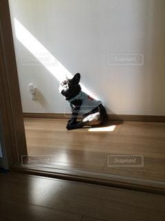 フレブル,ブサカワ,日向ぼっこ,悲しい顔,そんな顔で見ないで,太陽に連れてかれそー,眩しくないの?