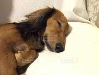 犬 - No.501416
