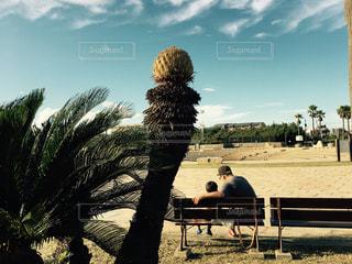 ヤシの木の横にあるベンチに座っている親子 - No.809012