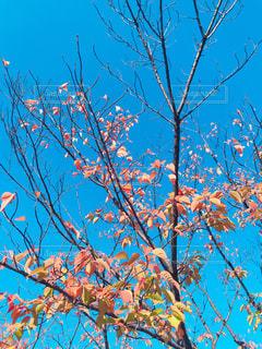 近くの木のアップの写真・画像素材[876713]
