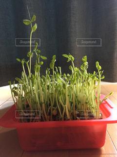 野菜の写真・画像素材[529312]