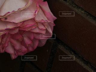 ピンクの写真・画像素材[503454]