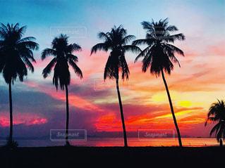 背景の夕日とヤシの木のグループの写真・画像素材[1275982]