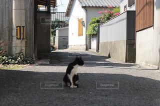 猫 - No.700976