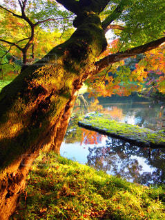 フォレスト内のツリー - No.865665
