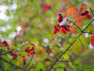 木の隣に座っている赤いりんご - No.872733