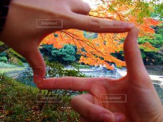 木の手 - No.873587