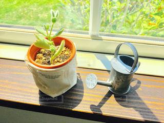 カフェ,インテリア,かわいい,きれい,シンプル,おしゃれ,日なた