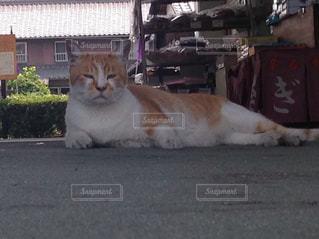 建物の上に横になっているオレンジと白猫の写真・画像素材[1274224]
