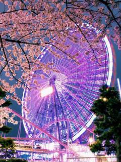桜の写真・画像素材[544906]