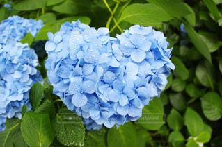 青の写真・画像素材[544959]